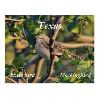 Northern mockingbird postcard
