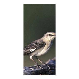 Northern Mockingbird Customised Rack Card