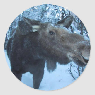 NORTHERN MOOSE CLASSIC ROUND STICKER