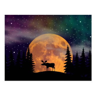 Northern Nights- Northern Lights Postcard
