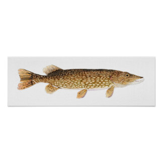 Northern Pike Art Poster
