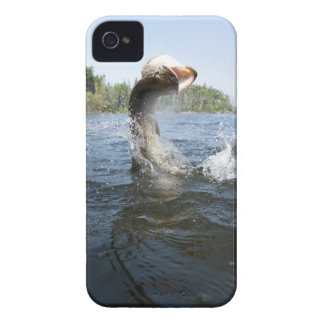 Northern Pike jumping out of water in a lake. iPhone 4 Case-Mate Cases