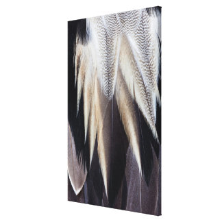 Northern Pintail Duck feather Canvas Print