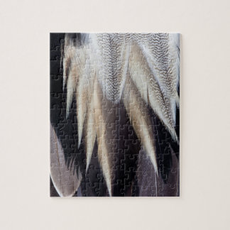Northern Pintail Duck feather Jigsaw Puzzle