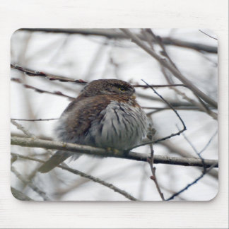 Northern Pygmy Owl Mouse Pads