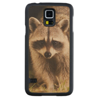 Northern Raccoon, Procyon lotor, adult at Carved Maple Galaxy S5 Case