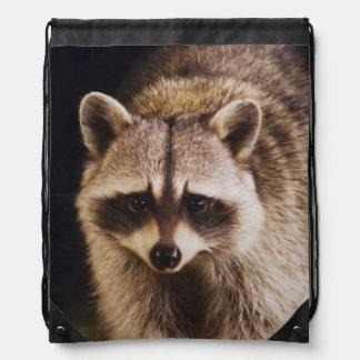Northern Raccoon, Procyon lotor, adult at Drawstring Bag