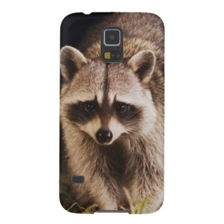 Northern Raccoon, Procyon lotor, adult at Galaxy S5 Cover