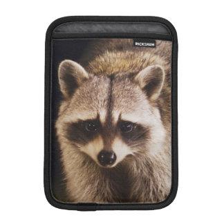 Northern Raccoon, Procyon lotor, adult at iPad Mini Sleeve
