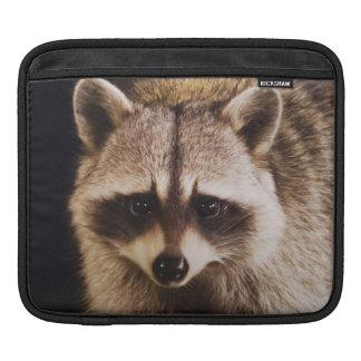 Northern Raccoon, Procyon lotor, adult at iPad Sleeve