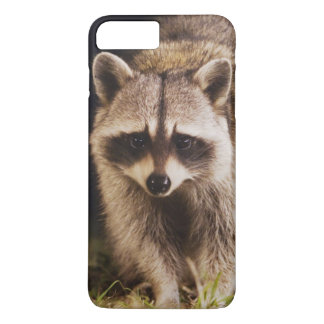Northern Raccoon, Procyon lotor, adult at iPhone 8 Plus/7 Plus Case