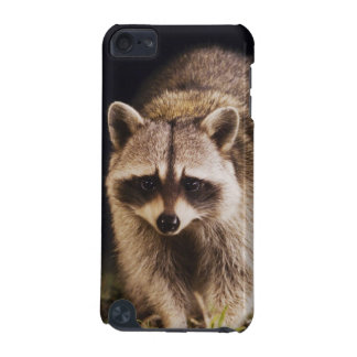 Northern Raccoon, Procyon lotor, adult at iPod Touch 5G Cover