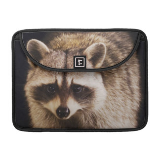 Northern Raccoon, Procyon lotor, adult at Sleeve For MacBooks