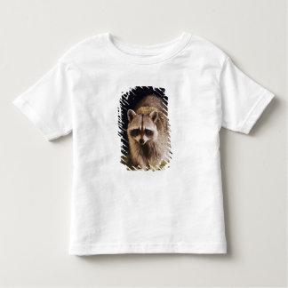Northern Raccoon, Procyon lotor, adult at Toddler T-Shirt