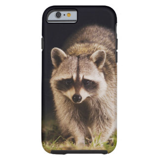 Northern Raccoon, Procyon lotor, adult at Tough iPhone 6 Case