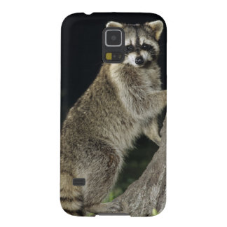 Northern Raccoon, Procyon lotor, adult at tree Galaxy S5 Cover