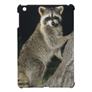 Northern Raccoon, Procyon lotor, adult at tree iPad Mini Case
