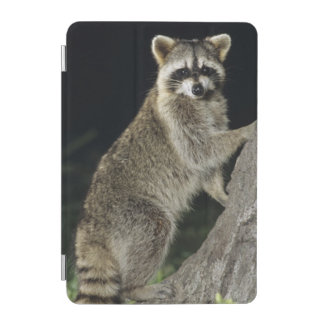 Northern Raccoon, Procyon lotor, adult at tree iPad Mini Cover