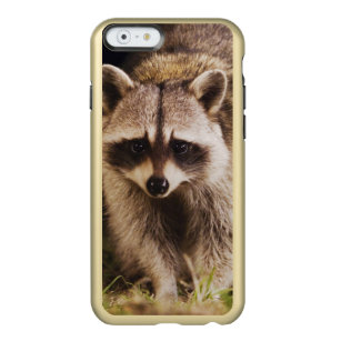 Northern Racoon, Procyon lotor, adult at Incipio Feather® Shine iPhone 6 Case