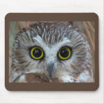 Northern Saw-whet Owl Close-Up Mouse Pad