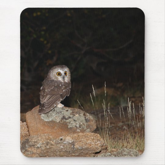 Northern Saw Whet Owl hunting at night Mouse Mat