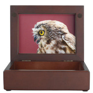 Northern Saw-Whet Owl Portrait Keepsake Box