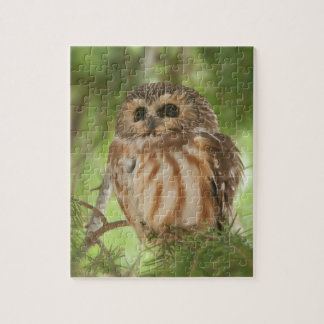 Northern Saw-whet Owl Puzzle