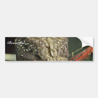 Northern Spotted Owl Bumper Stickers