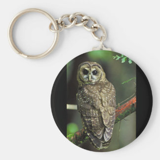 Northern Spotted Owl Key Ring