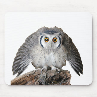 """Northern White-faced Owl"" Mouse Pad"