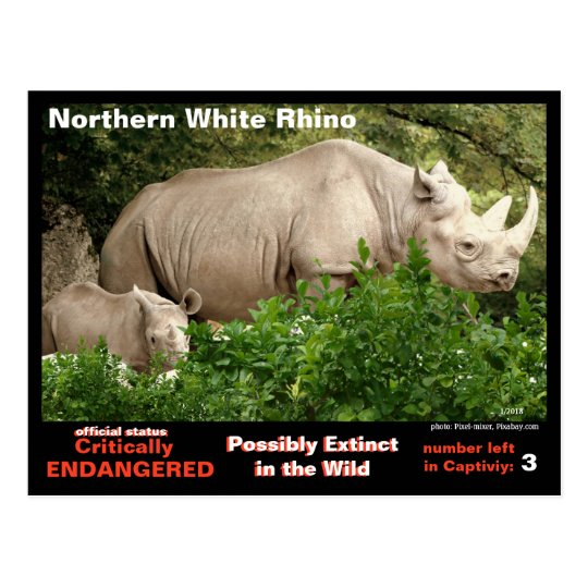 Northern White Rhino is critally endangered =~ Postcard
