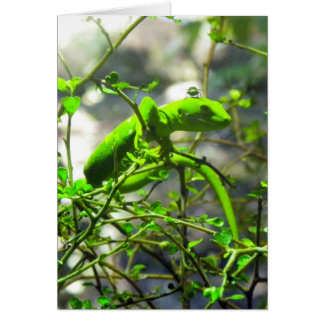Northland Green Gecko Card