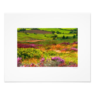 "Northumberland Flora 20""x16"" Photo Print"