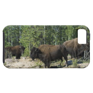 Northwest Territories. Wood Buffalo National iPhone 5 Case