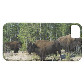 Northwest Territories. Wood Buffalo National iPhone 5 Cases
