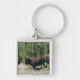 Northwest Territories. Wood Buffalo National Keychain