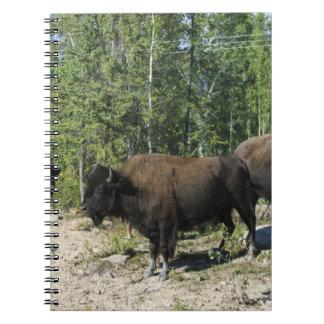 Northwest Territories. Wood Buffalo National Note Book