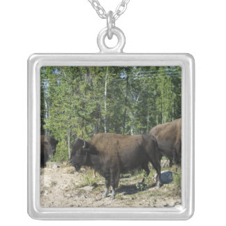 Northwest Territories. Wood Buffalo National Silver Plated Necklace