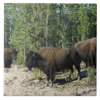 Northwest Territories. Wood Buffalo National Tile