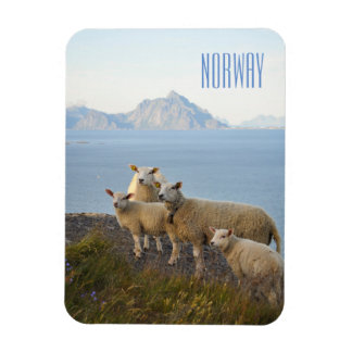 Norway sheep on mountain top landscape photo magne magnet