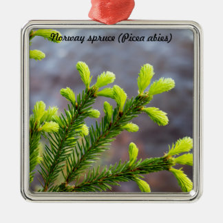 Norway spruce Silver-Colored square decoration