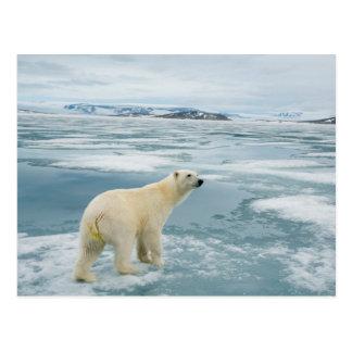 Norway, Svalbard Archipelago, Spitsbergen 2 Postcard