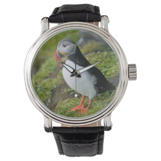 Norway, Svalbard Archipelago, Spitsbergen 9 Watch