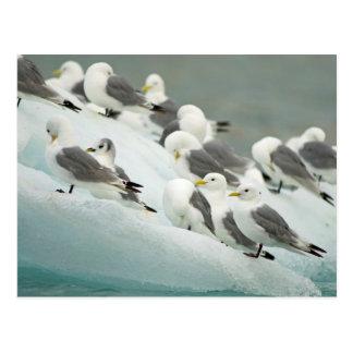 Norway, Svalbard Archipelago, Spitsbergen Postcard