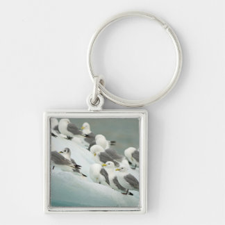 Norway, Svalbard Archipelago, Spitsbergen Silver-Colored Square Key Ring