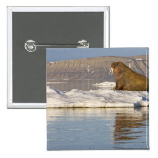 Norway, Svalbard, Edgeoya Island, Walrus 15 Cm Square Badge