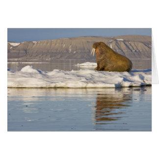Norway, Svalbard, Edgeoya Island, Walrus Card