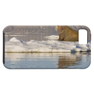 Norway, Svalbard, Edgeoya Island, Walrus iPhone 5 Covers