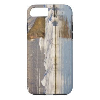 Norway, Svalbard, Edgeoya Island, Walrus iPhone 8/7 Case