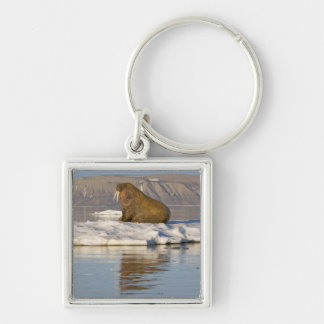 Norway, Svalbard, Edgeoya Island, Walrus Key Ring
